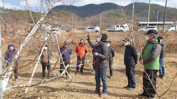 [농촌지원과]무을 복숭아 현장전정교육3.jpg