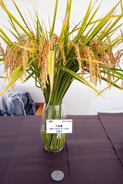 (9-1)다솜쌀(1).JPG