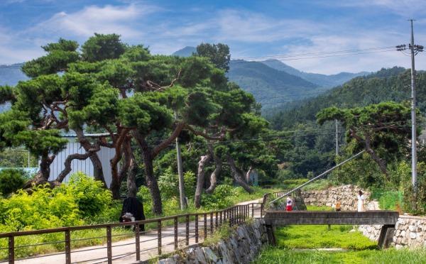 [농촌지원과] 소나무와 사람이 함께하는 초곡마을, 동상수상3.jpg